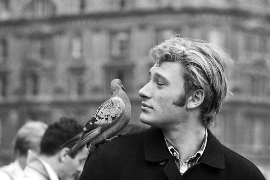 Johnny-hallyday-a-londres-royal-variety-performance-pigeon-sur-epaule-1965-photo-DR